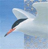 Common Tern II