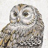 Beautiful Owls I
