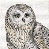 Beautiful Owls II