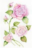 Floral Delight IV