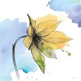 Watercolor Graphite Flower VIII
