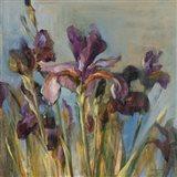 Spring Iris I