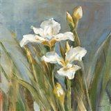 Spring Iris II