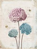 Geranium Study I Pink Flower
