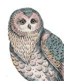 Beautiful Owls IV Pastel