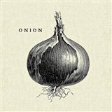 Linen Vegetable BW Sketch Onion