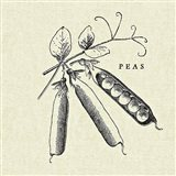 Linen Vegetable BW Sketch Peas
