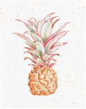 Gracefully Blush Pineapple XII