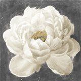 Vivid Floral I White Flower