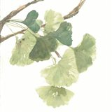 Gingko Leaves I on White