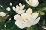 Magnolia Blooms No Petal