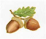 Autumn Days Acorns