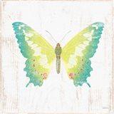 White Barn Butterflies III