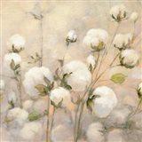 Cotton Field Crop