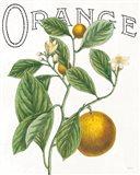Classic Citrus VI