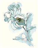 Carols  Roses IV Cerulean