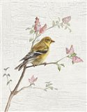 Female Goldfinch Vintage v2