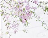 Spring Branches II