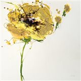 Yellow Poppy Master on White