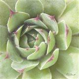 Garden Succulents II Color