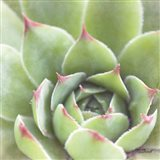 Garden Succulents III Color