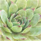 Garden Succulents IV Color