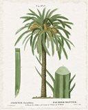 Island Botanicals II