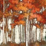 October Woods Light