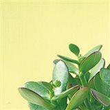 Succulent Simplicity IV