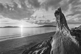 Samish Bay Sunset I BW