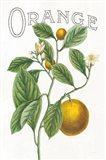 Classic Citrus VI v2