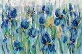 Iris Flower Bed