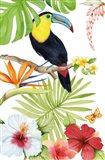 Treasures of the Tropics I