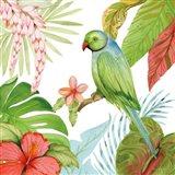 Treasures of the Tropics VII