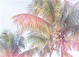 Dream Palm I