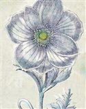 Belle Fleur II Crop