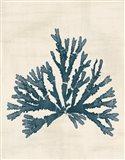 Pacific Sea Mosses IV No Map