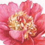 Pink Garden V
