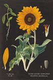 Sunflower Chart