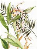 Botanical Shell Ginger