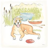 Dog Days of Summer Comet