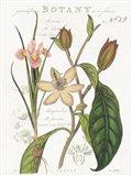 Vintage Floral III Neutral