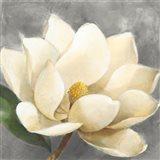 Magnolia Blossom on Gray