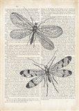 Vintage Dragonflies on Newsprint