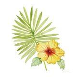 Treasures of the Tropics XI