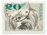 Poland Stamp II on White