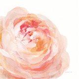 Garden Rose on White Crop