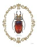 Adorning Coleoptera I