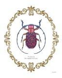 Adorning Coleoptera II