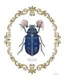 Adorning Coleoptera III